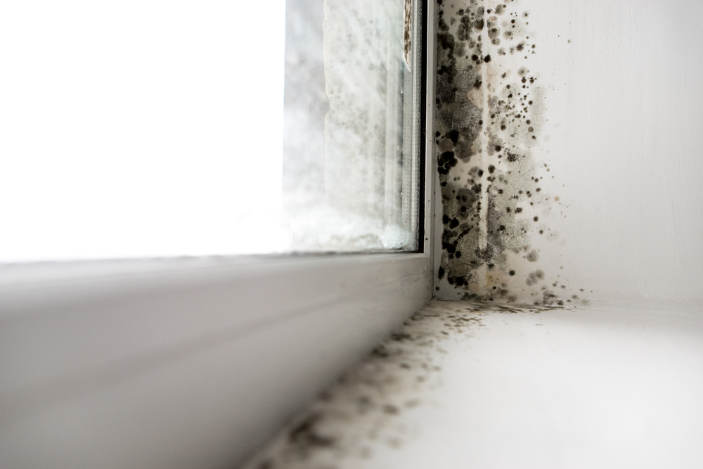 Mold In The Corner Near A Window